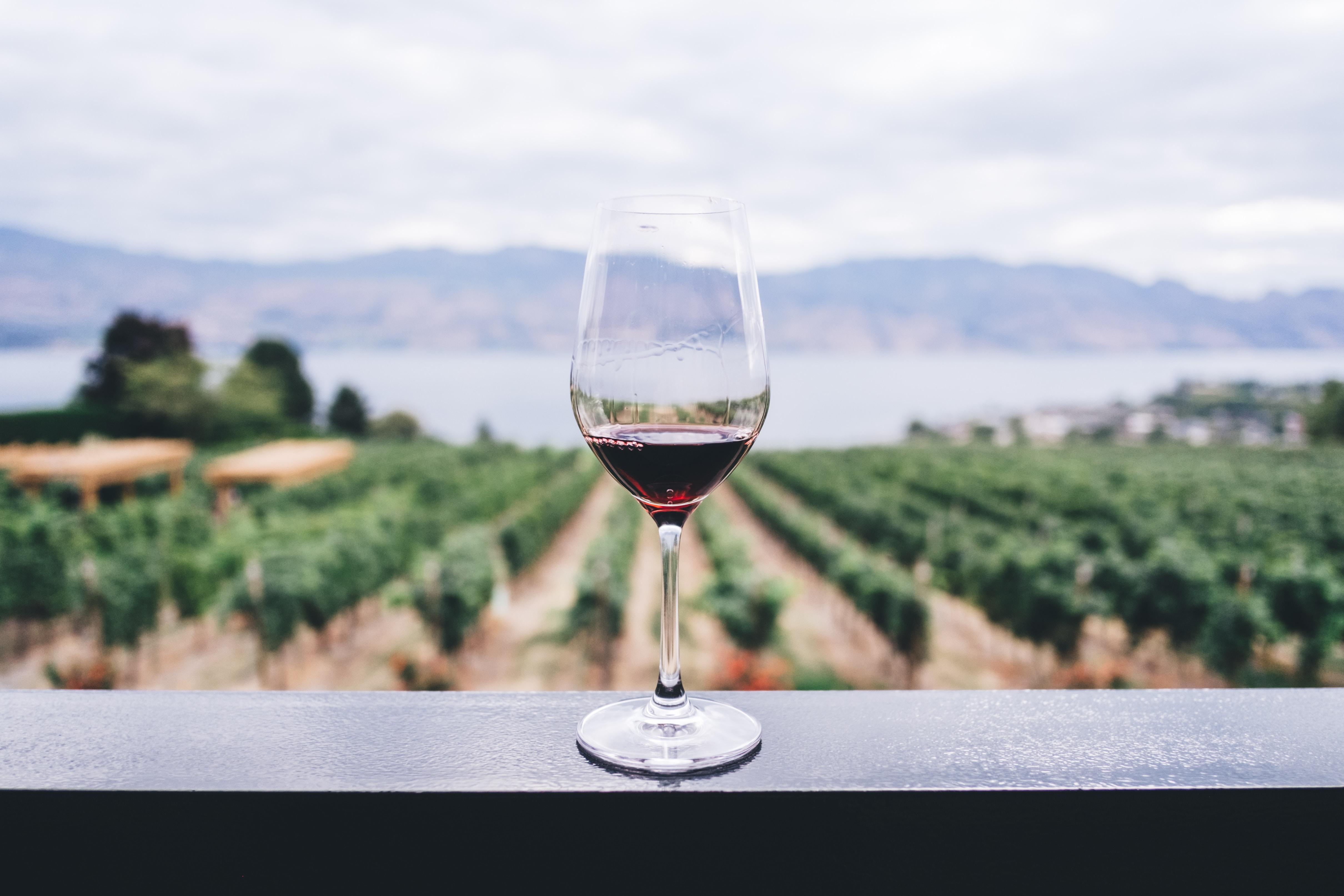 vino bio1